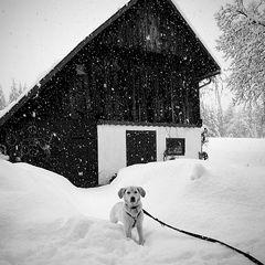 Luzi mag Schnee!