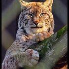 Lynx eyed