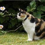 Lyra sagt´s durch die Blume...