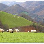 M.. comme moutons dans la montagne