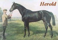 M. Herold