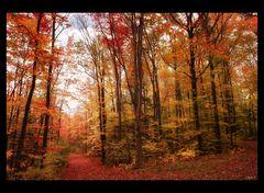 Ma balade en forêt (2)