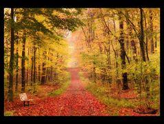 Ma balade en forêt (3)