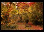 Ma balade en forêt