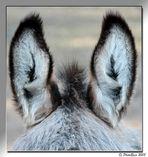 Ma che orecchie grandi che hai....!!!!