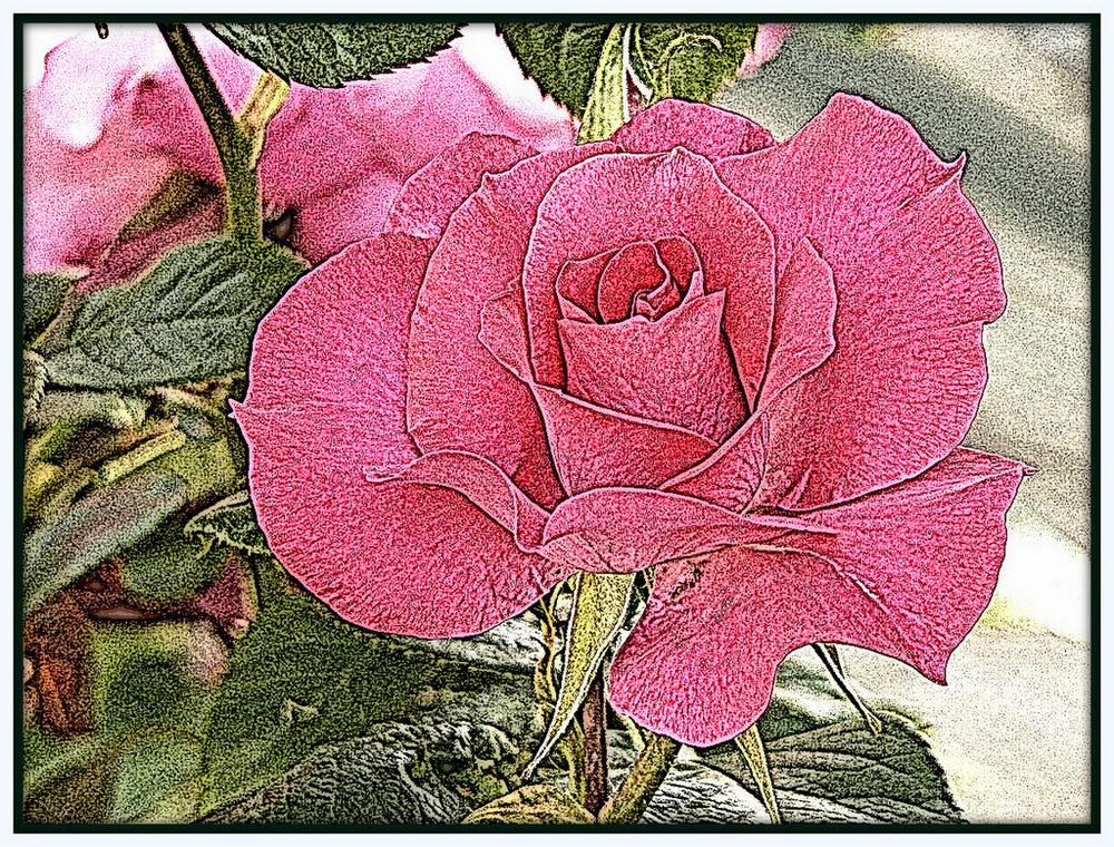 Ma fleur...