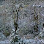 * ma forêt sous la neige *