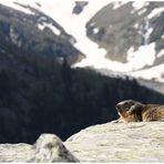 Ma marmotte 2