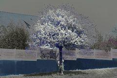 Ma vision du printemps