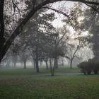 Mañana con niebla