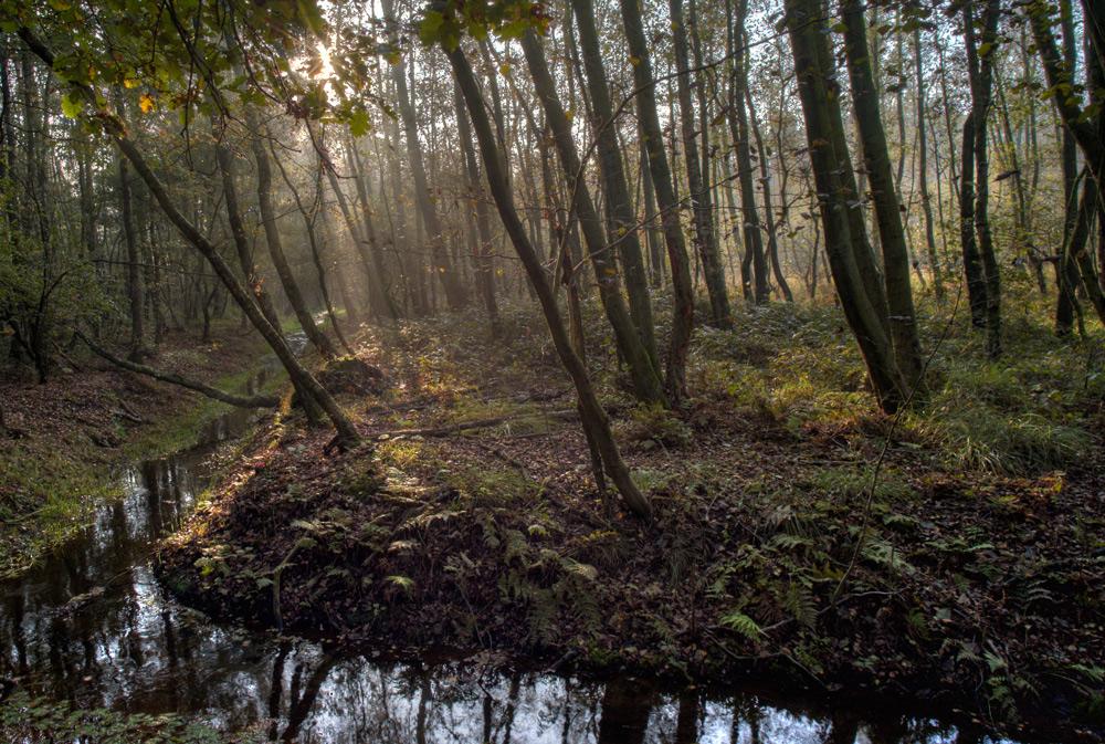 Maas-Schwalm-Nette am Morgen (1)
