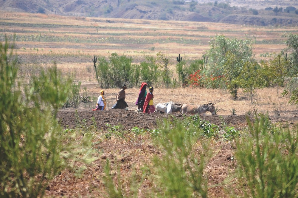Maasai on the way to market