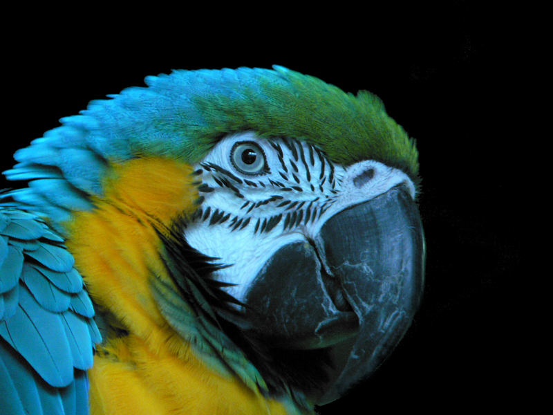 Macaw (Ara) im Aquarium South Carolina