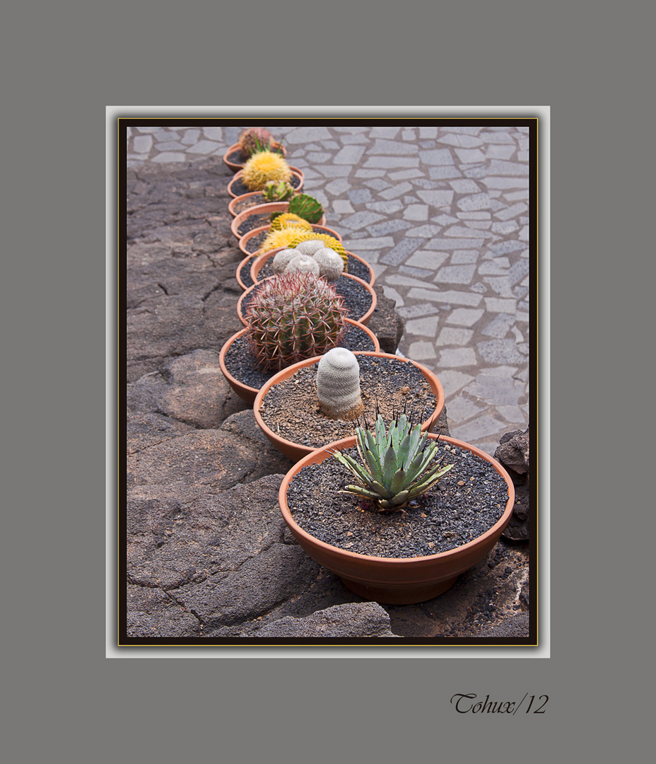 Macetas y cactus