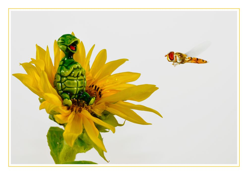Mach bloß 'ne Fliege *