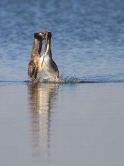 Mach mir den Pinguin...