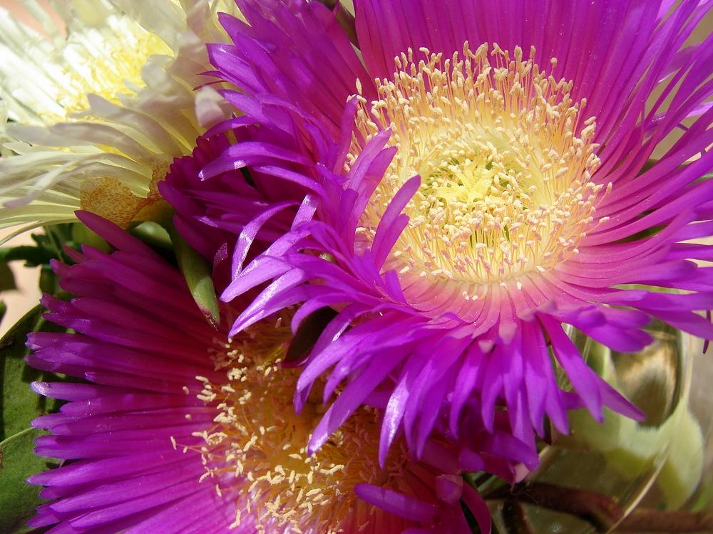 macht es wie diese Blüten...