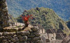 Machu Picchu Impressionen