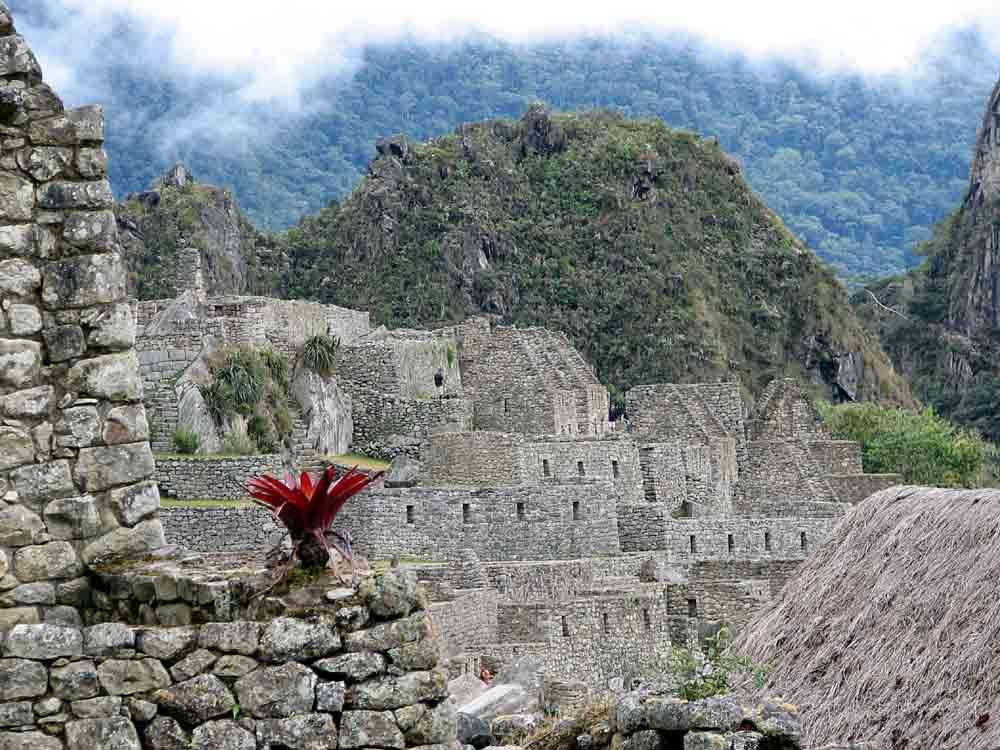 Machu Picchu mit Blüte