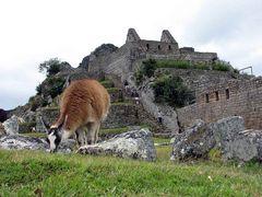 Machu Picchu mit einem Einheimischen