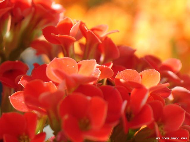 Macro Hot Flowers