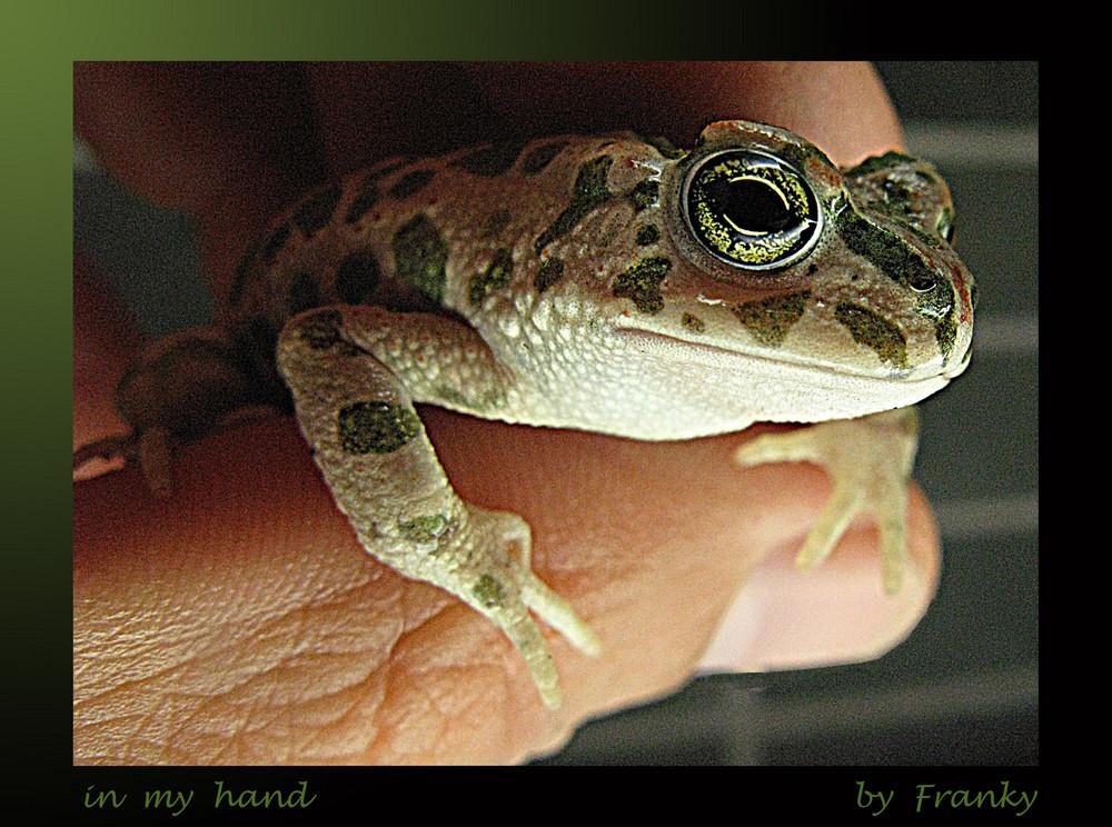 macro-in my hand