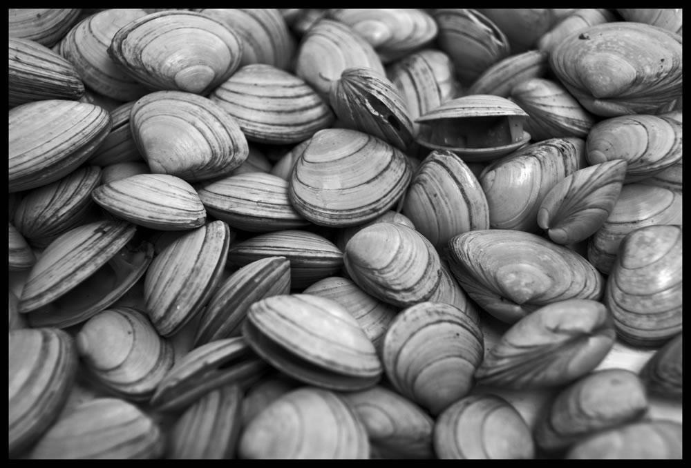 Macro of Shells