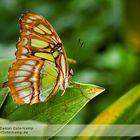 Macroshot Schmetterling Bambuspage