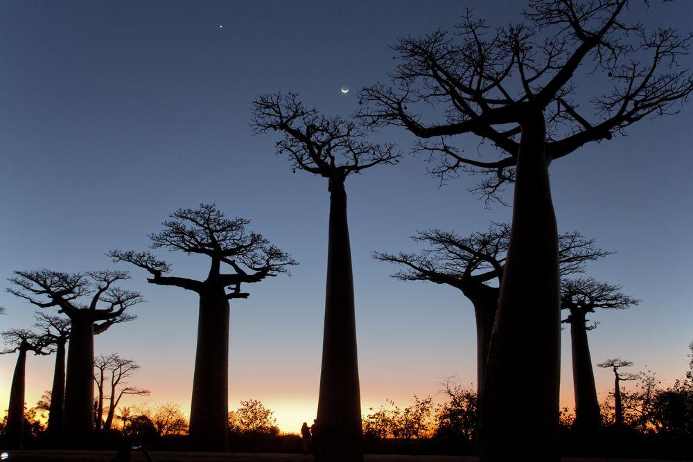 Madagascar night