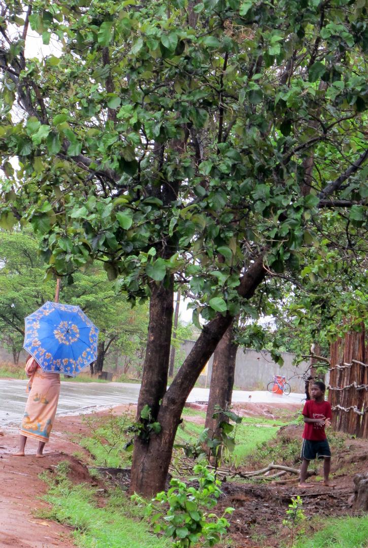 Madagascar parapluie