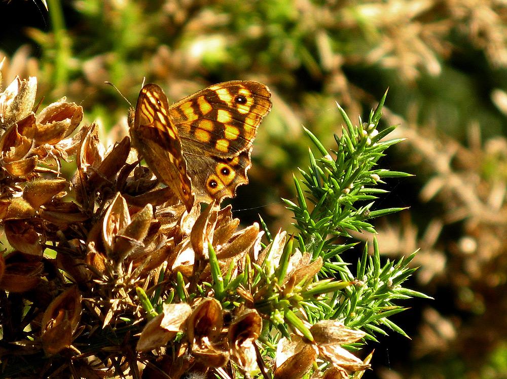 Madame Butterfly vestida de otoño