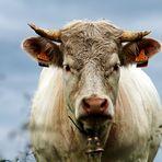 Madame la Vache  -   N° 7048