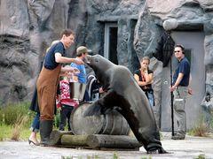 Maddin und die Seelöwen....