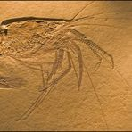 Made of stone / fossil record