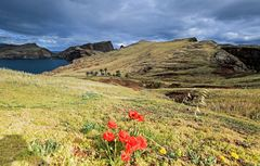 Madeira (24)