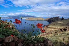 Madeira (6)