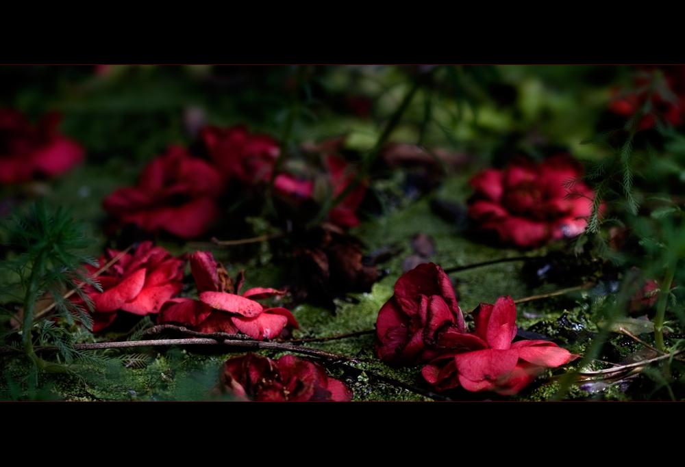Madeira Blüteninsel 4