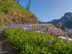 Madeira die Blumeninsel