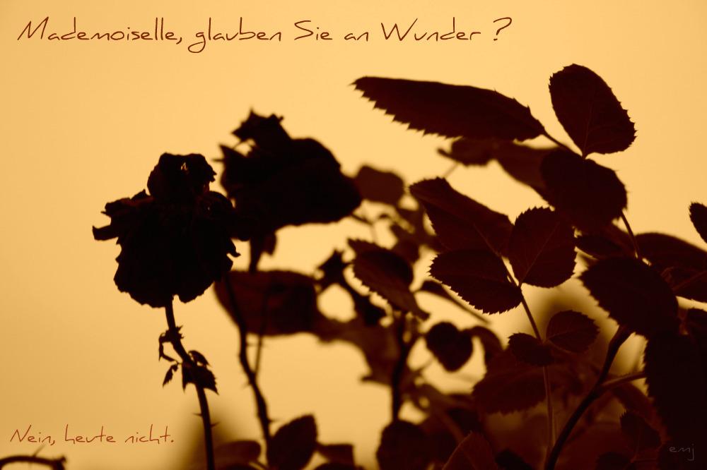 Mademoiselle.. ?