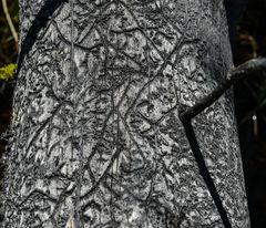 Madenspuren im toten Holz    DSC_3665-2