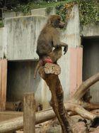 Madrid Zoo 2012