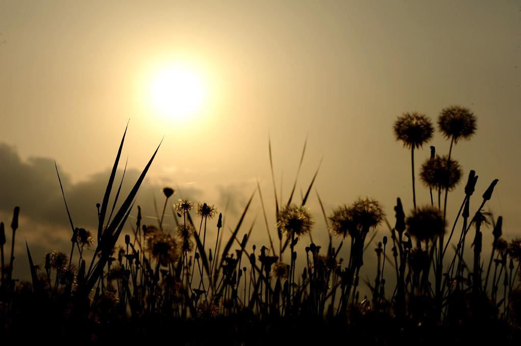 madrugada floral
