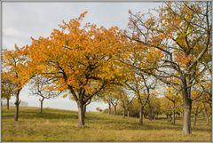 Mächtig Herbst