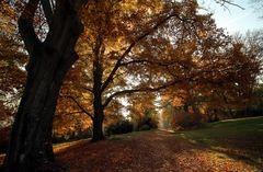 ...mächtiger Herbst...