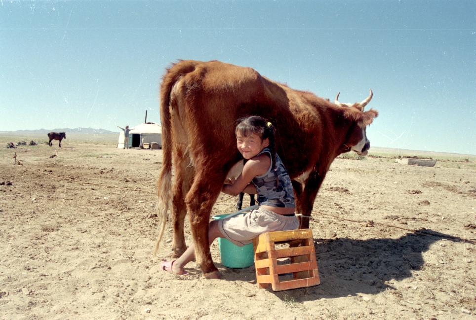 Mädchen beim melken Foto & Bild | asia, mongolia, north