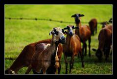 Mädels schaut mal was da vor dem Zaun kniet ;-)