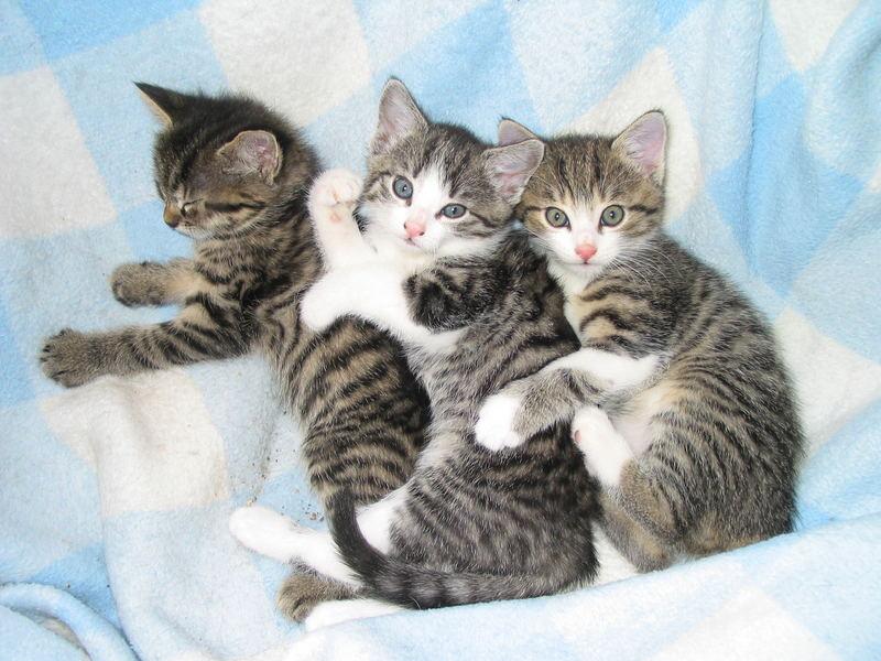 Mädi, Vicky und Karli hintereinandergekuschelt