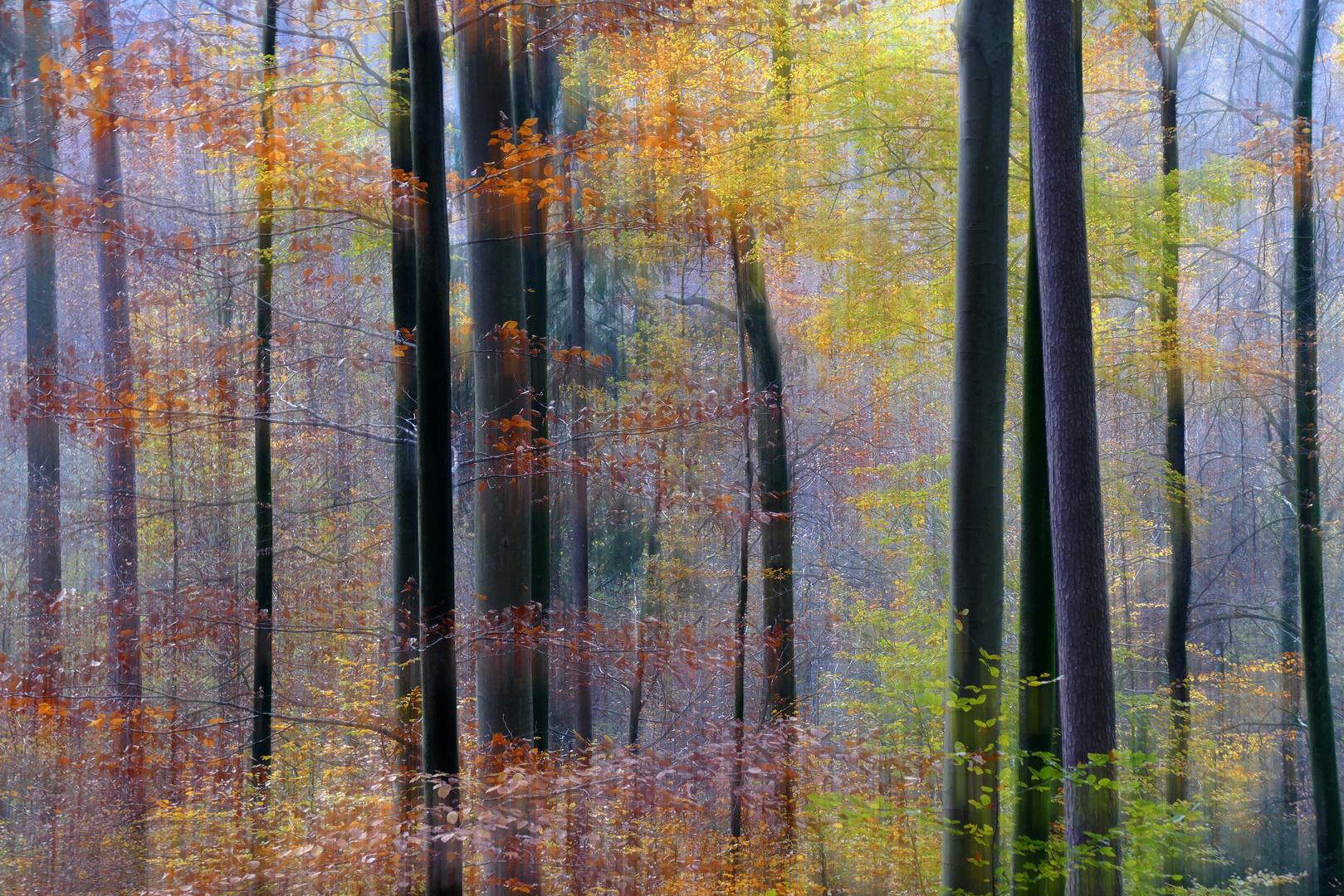 Märchen-Wald