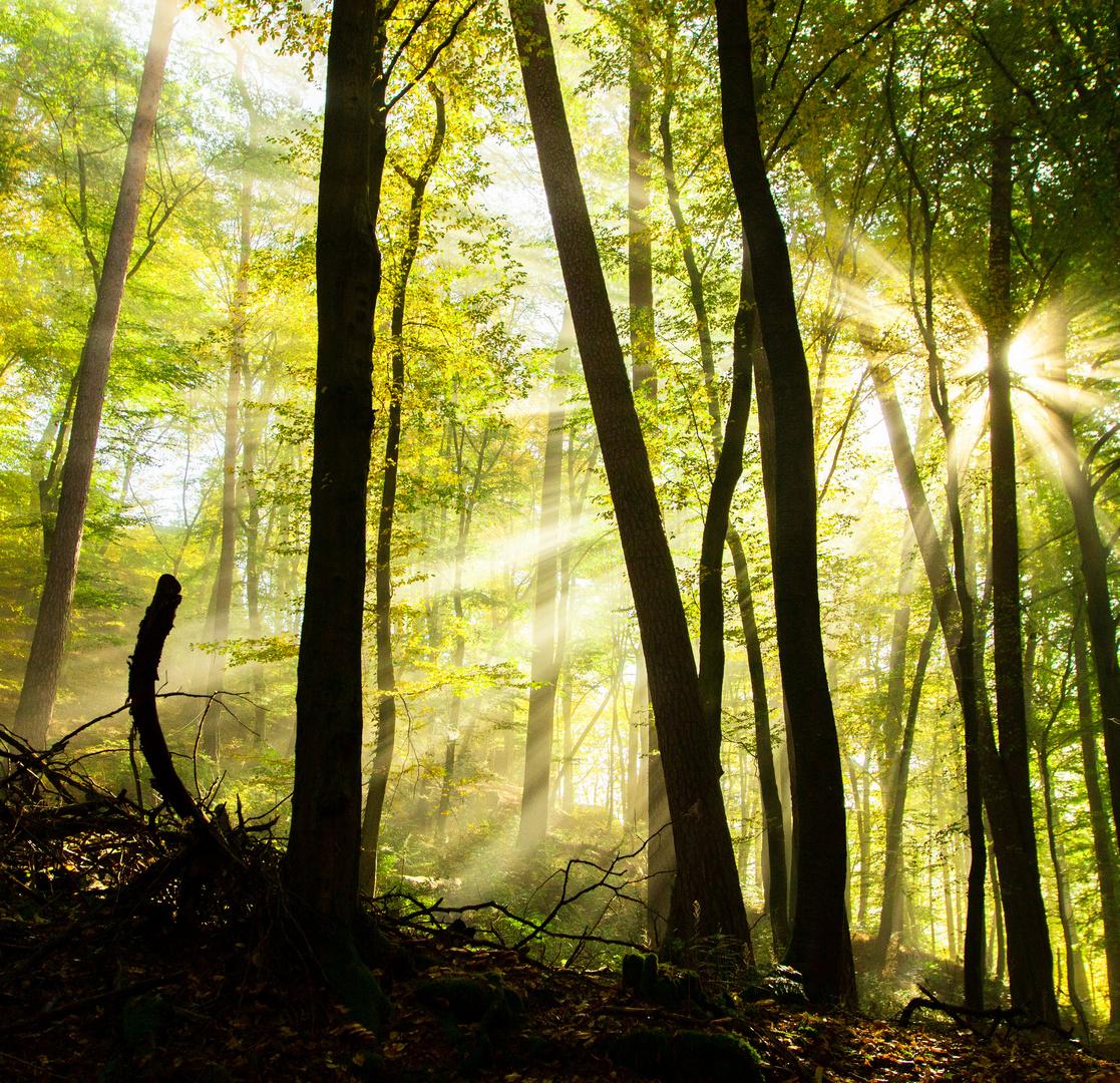 Märchen Wald