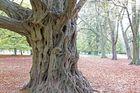"""""""Märchenbaum"""" im Tiergarten"""